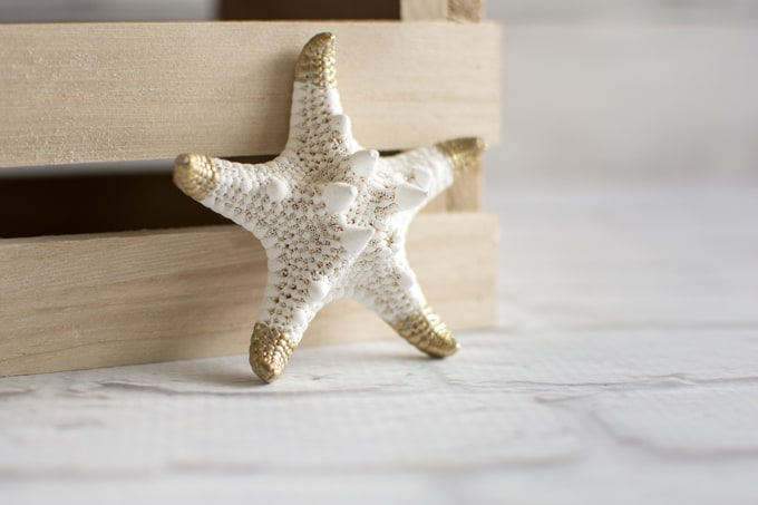 starfish with gold tips