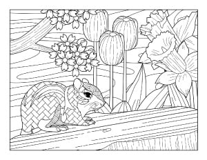 spring coloring page with flowers and squirrel